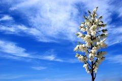 Cieux fleurissants Images libres de droits