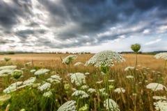 Cieux orageux Photographie stock libre de droits
