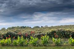 Cieux orageux au-dessus d'un vignoble du Michigan Etats-Unis photos libres de droits