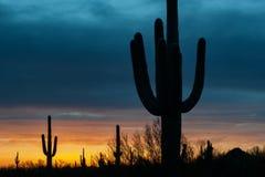 Cieux rougeoyants de désert Photos stock