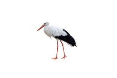 Cigüeña blanca Foto de archivo libre de regalías