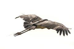 Cigüeña de marabú enredada Fotos de archivo