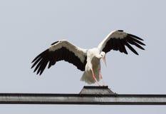 Cigüeña del aterrizaje Imagen de archivo