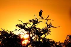 Cigüeña en la puesta del sol fotografía de archivo libre de regalías