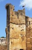 Cigüeña en ruinas de Chellah en Marruecos fotografía de archivo