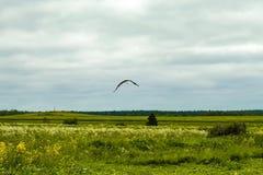 Cigüeña en un campo Fotos de archivo
