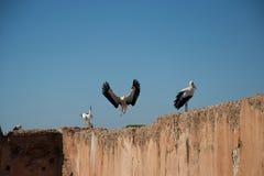 Cigüeña en vuelo y cigüeñas en la pared fotografía de archivo