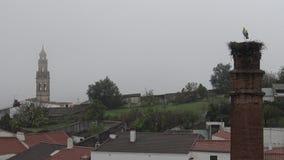 cigüeña 4K en la jerarquía sobre una columna un día que llueve de Jerez de los Caballeros metrajes
