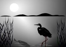 Cigüeña negra Imágenes de archivo libres de regalías