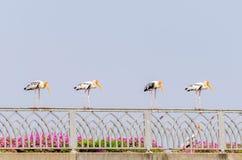 Cigüeña pintada Foto de archivo libre de regalías