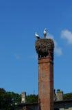 Cigüeñas blancas Fotografía de archivo libre de regalías