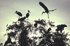 Cigüeñas del amanecer Imagen de archivo libre de regalías