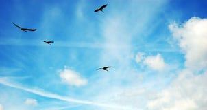 Cigüeñas del recorrido Fotos de archivo libres de regalías