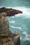 Cigüeñas en el acantilado Portugal Foto de archivo libre de regalías