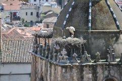 Cigüeñas en el tejado fotografía de archivo