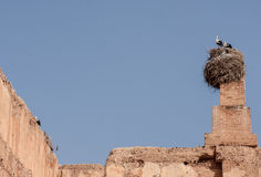 Cigüeñas en Marrakesh Imagen de archivo