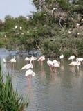 Cigüeñas en un lago Fotos de archivo libres de regalías
