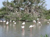 Cigüeñas en un lago Foto de archivo libre de regalías