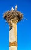 Cigüeñas en un pilar de Roman Basilica en Volubilis, Marruecos Foto de archivo libre de regalías