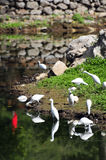 Cigüeñas por un río Imagen de archivo