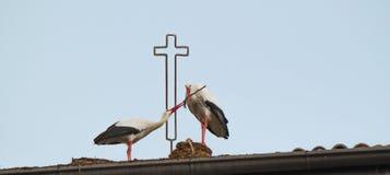 Cigüeñas que construyen la jerarquía Foto de archivo