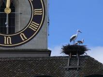 Cigüeñas roosting en el tejado cerca del reloj Imagen de archivo