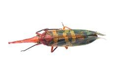 Cigale d'insecte images libres de droits