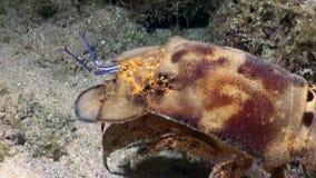 Cigale de MER-Mar Cigale
