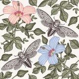 Cigales de ketmie Fleurit la faune d'insectes de mauve Fond sans joint de textile Gravure de dessin À main levée réaliste d'isole illustration de vecteur