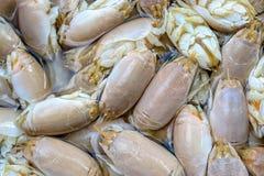 Cigales de mer Photo libre de droits