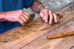 Cigar Royalty Free Stock Photo