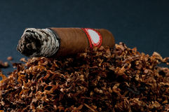 Cigar Royalty Free Stock Photo