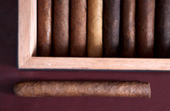 Cigar. A few cigars in the humidor Royalty Free Stock Image