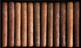 Cigar. S in a row close-up, may be used as background Royalty Free Stock Photography