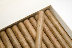 Cigar Stock Photography