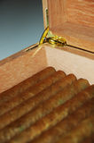 Cigar humidor #1. Hand rolled cuban cigars in a humidor Royalty Free Stock Photo