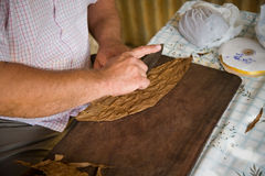 Cigar manufacturing, Cuba Royalty Free Stock Image
