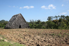Cigar plantation in Cuba, Vinales. Hut for drying the cigar leaves, Vinales, Cuba Royalty Free Stock Photography