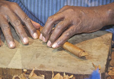 Cigar Rolling in Cuba Royalty Free Stock Photo