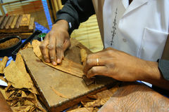 Cigar rolling Royalty Free Stock Photography
