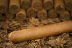 Cigar on Tobacco Royalty Free Stock Images