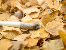 Cigaret en follaje Fotos de archivo libres de regalías