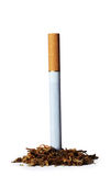Cigarette. One cigarette isolated on white background Stock Image