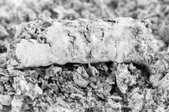 Cigarette ash Royalty Free Stock Images