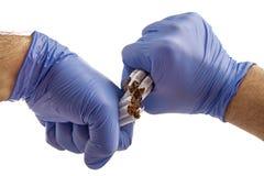 Cigarette avec les mains enfilées de gants Image stock