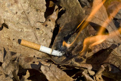Cigarette burning leaves. Cigarette lighting leaves on fire Stock Photos