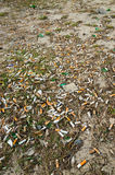 Cigarette butts on lawn of city in spring after snow melts Royalty Free Stock Photo