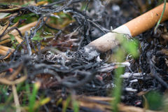 Cigarette causing a dangerous fire on the forest Royalty Free Stock Image