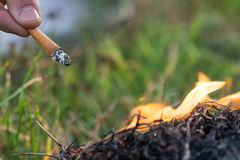 Cigarette causing a dangerous fire on the forest Stock Photography