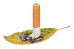 Cigarette end. A cigarette end on a dead leaf Stock Photo
